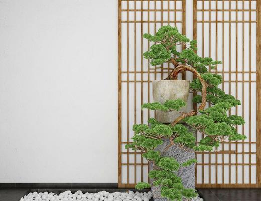 盆栽植物, 盆栽, 植物