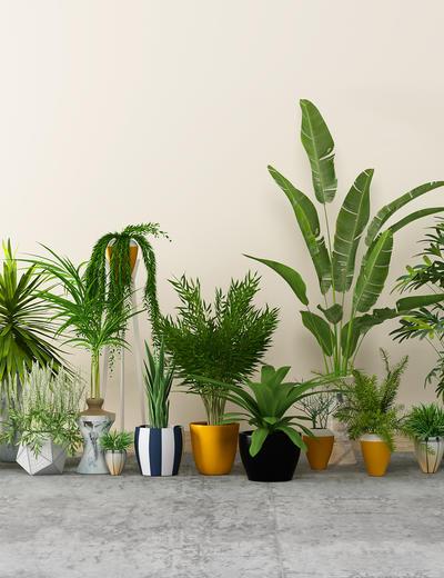 盆栽组合, 植物组合, 盆栽, 植物, 绿植, 现代