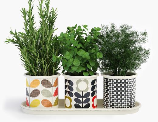 植物, 盆栽